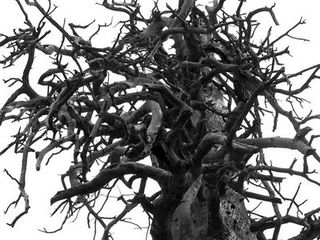 3.twisty-tree